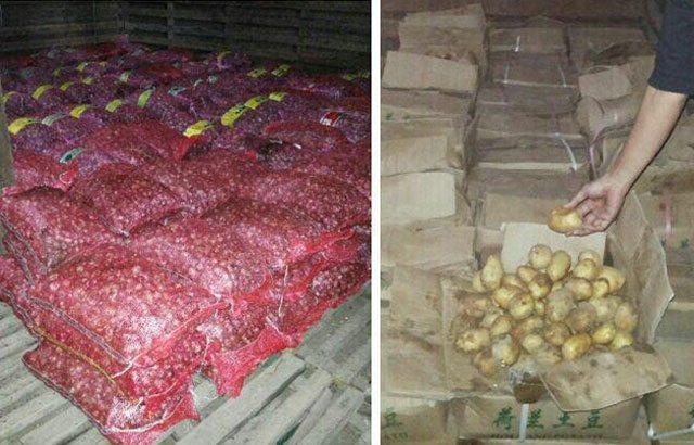 Lagi, TNI Gagalkan Selundupan 14 Ton Sayuran Ilegal Di Perbatasan RI – Malaysia