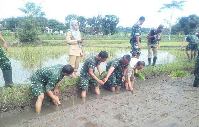 Babinsa Terus Tingkatkan Pendampingan Kepada Para Petani
