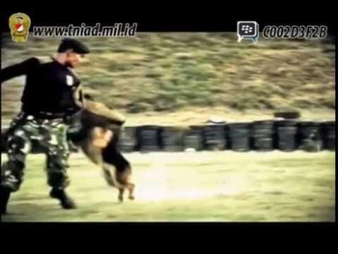 Profil Yonif Raider 500 Sikatan