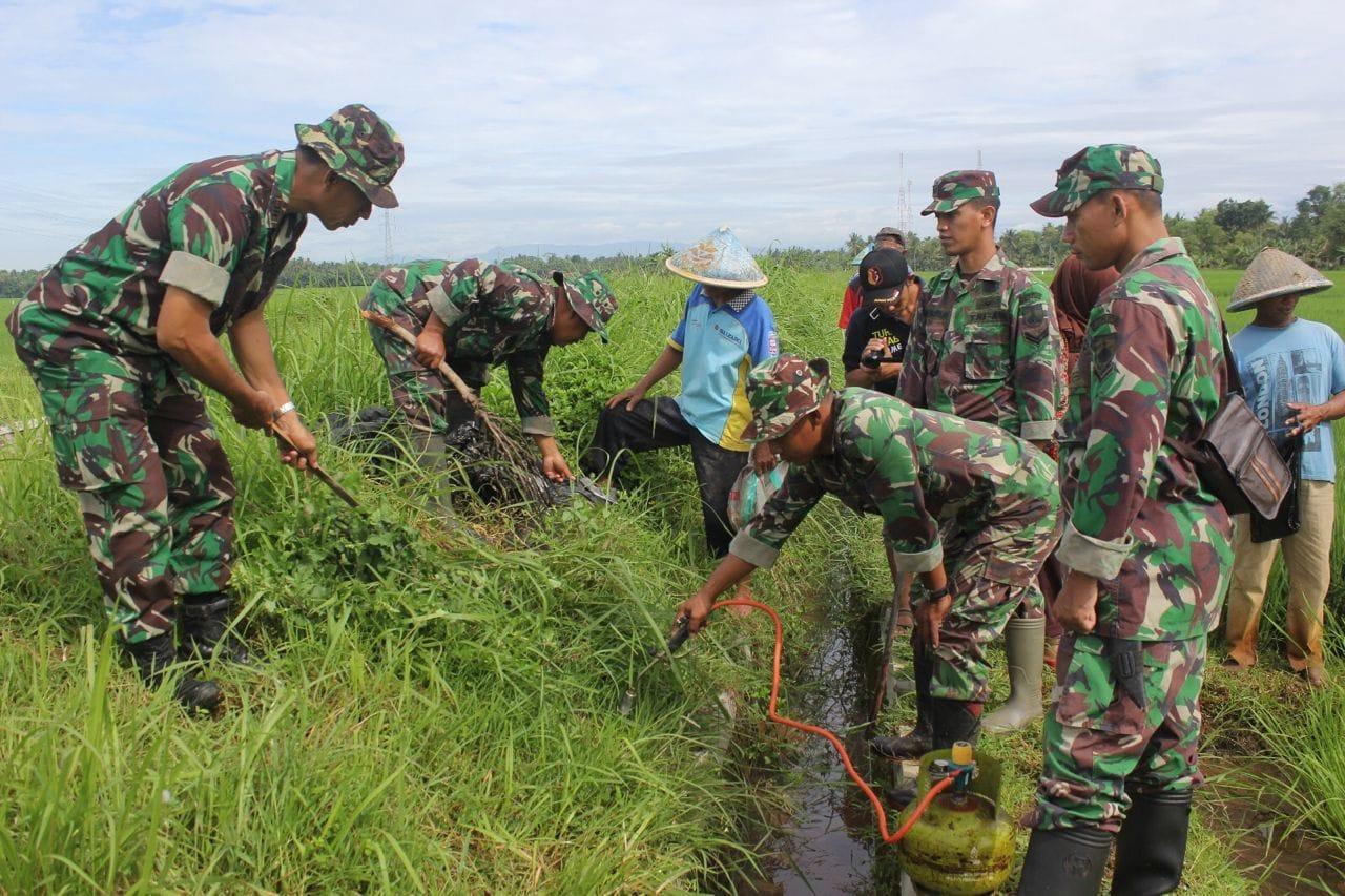 Wujudkan Swasembada Pangan di Purworejo, TNI Bersama Petani Nggropyok Tikus