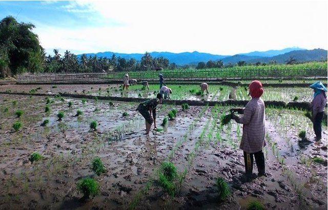 Sumbar Programkan TNI Bimbing Petani untuk Capai Hidup Sejahtera