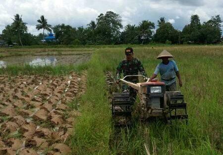 Ujung Tombak Teritorial, Babinsa Dampingi Petani Tanam Padi.