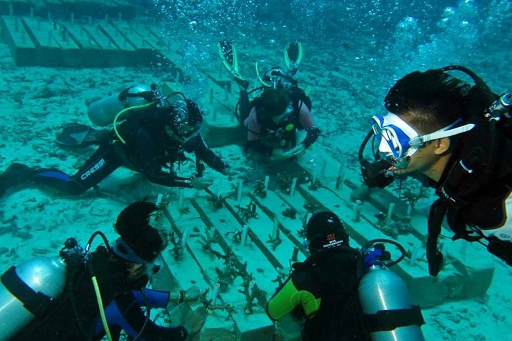 Meriahkan Hari Coral Nasional, Personel Kodim 0112 Tanam Terumbu Karang
