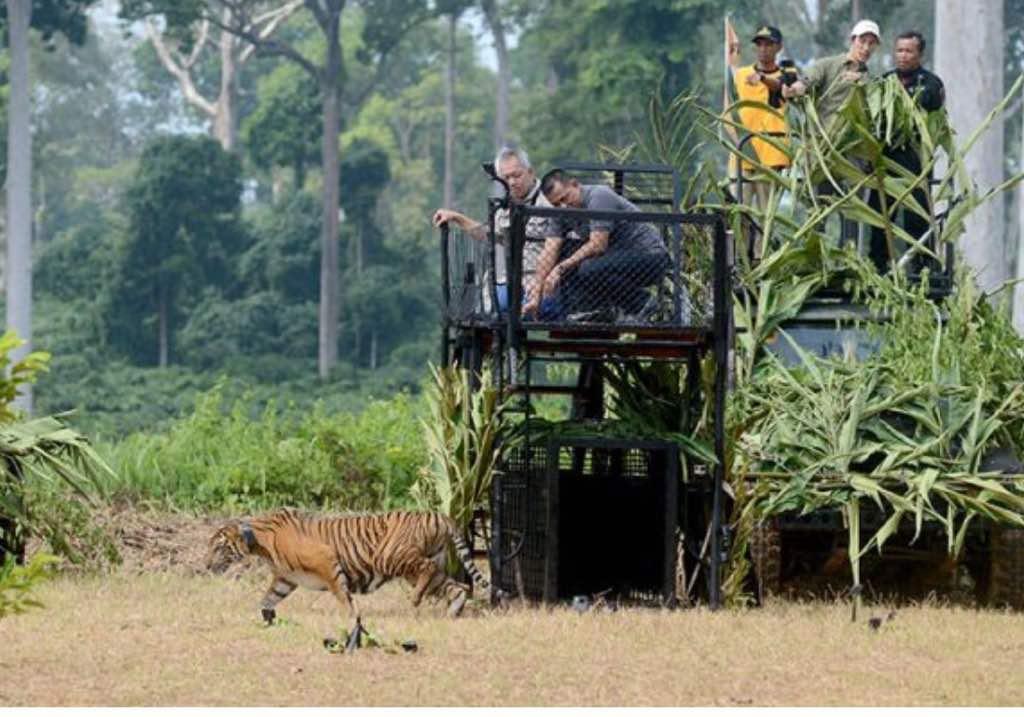 Panglima TNI: Hutan Miliki Fungsi Strategis Menunjang Kecakapan TNI