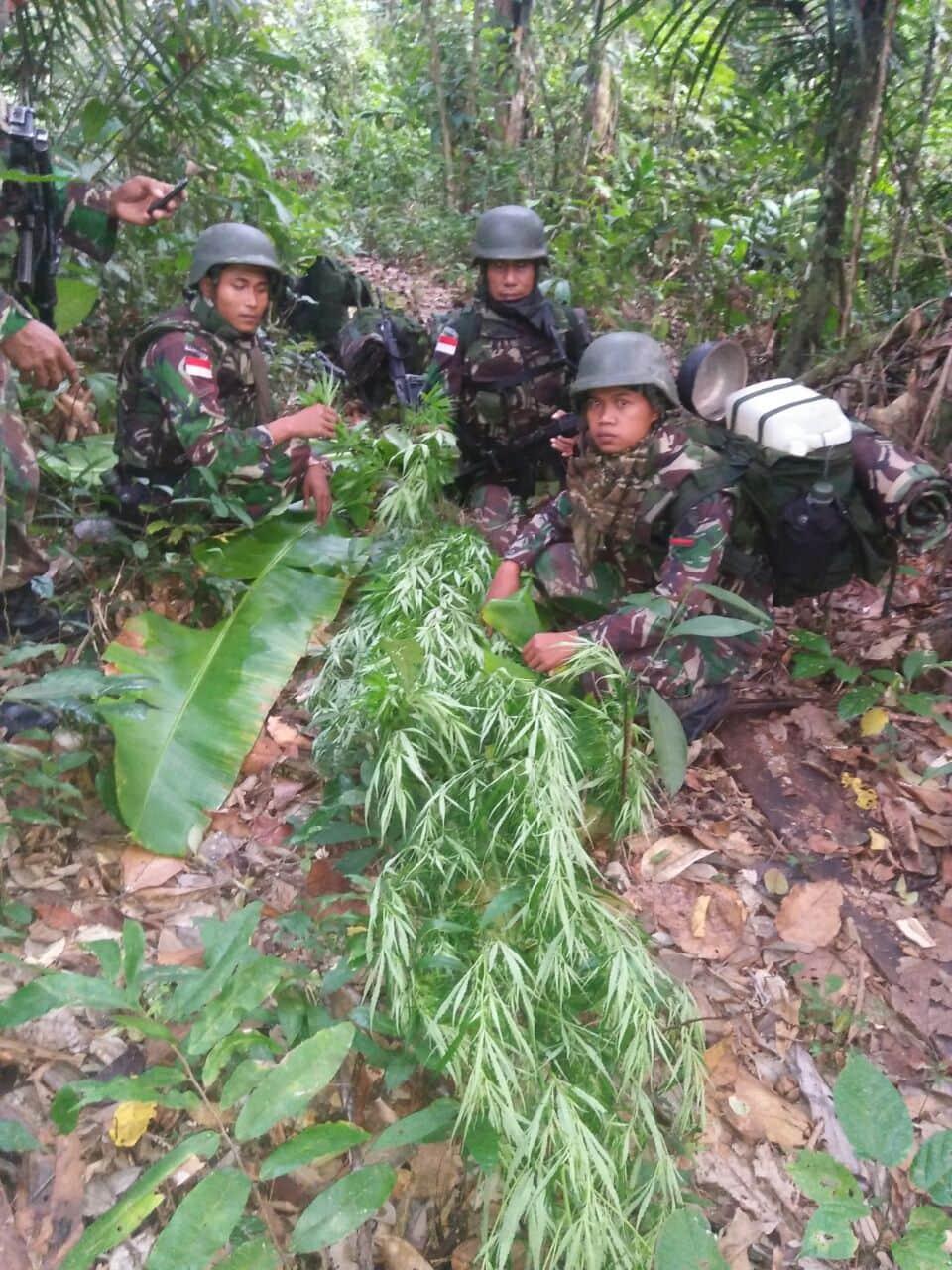 Gelar Patroli Keamanan, Satgas TNI Temukan Ladang Ganja