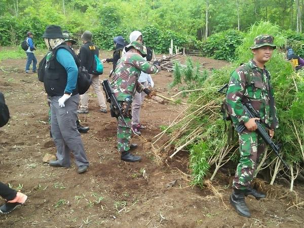 1 Hektar lahan Ganja Dimusnakan di Gampong Lamteuba Droe Mukim Lamteuba, Seulimeum, Aceh Besar