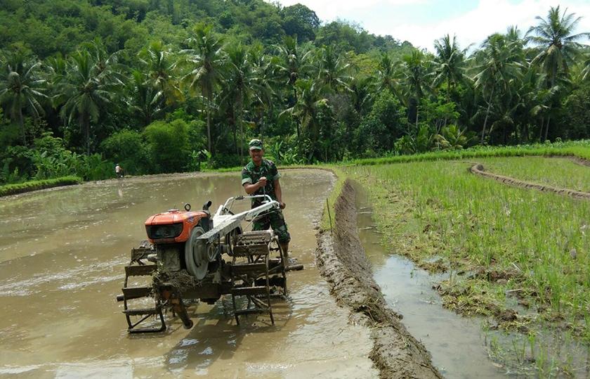 Babinsa Bantu Bajak Sawah Petani Dengan Traktor