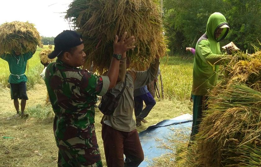 Petani Berharap Pemerintah Tidak Impor Beras Saat Musim Panen