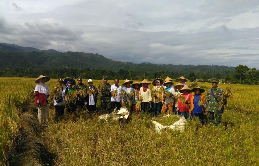 Babinsa Muara Pinang Terus Dampingi Petani Tingkatkan Produksi Padi