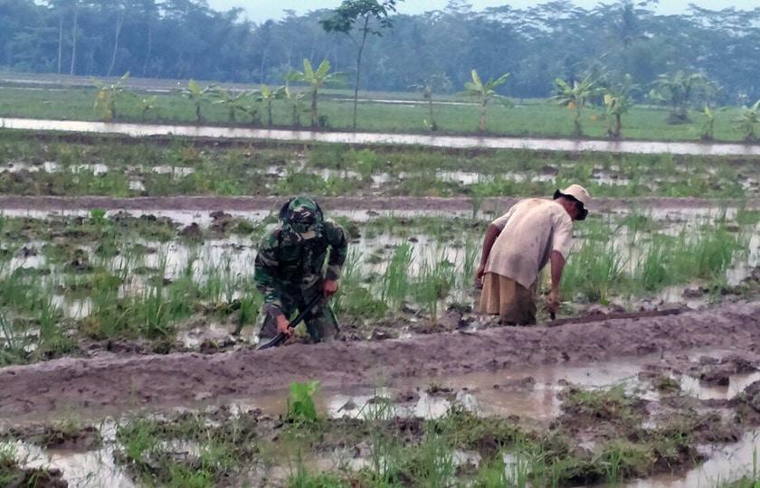 Bantu Petani, Berjibaku Dengan Lumpur pun Tidak Masalah