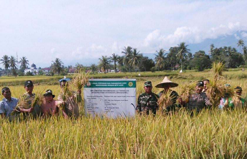 TNI Bersama Muspika Aceh Besar Melaksanakan Panen Raya Padi
