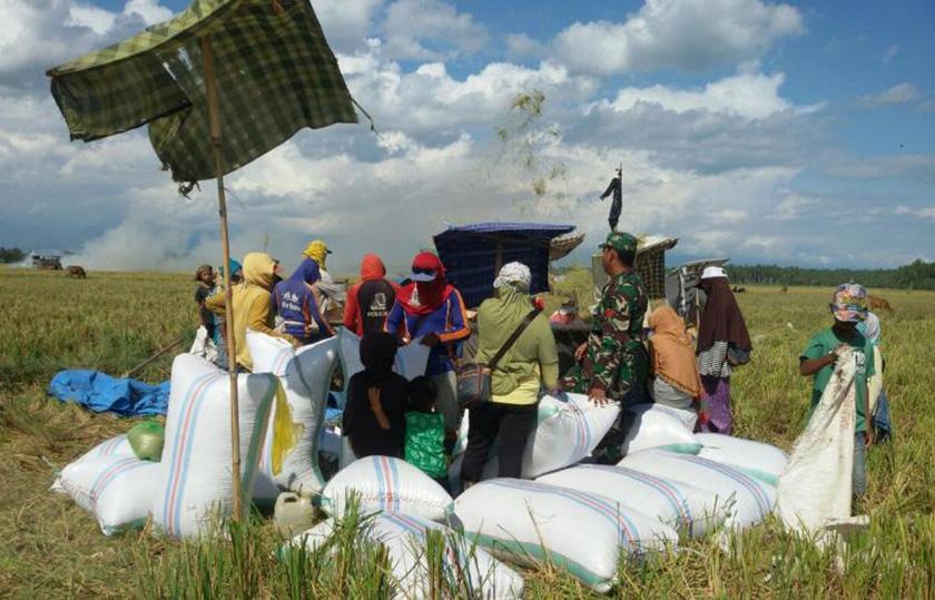 Sukseskan Swasembada Pangan, Babinsa Terus Lakukan Pendampingan Pertanian