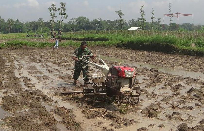 Tingkatkan Produksi Pangan, Babinsa Bantu Garap Sawah Dengan Traktor