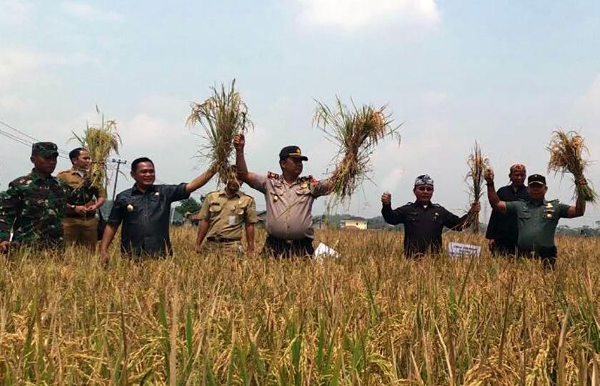 Wakil Bupati Bekasi Apresiasi Keberhasilan Babinsa Dampingi Petani