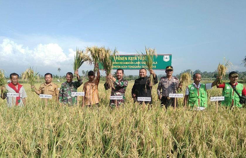 Panen Raya Padi Tingkatkan Perekonomian Petani
