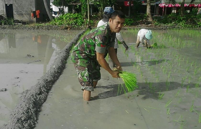 Tim Gabungan Kodim dan Polres Aceh Selatan Temukan Ladang Ganja