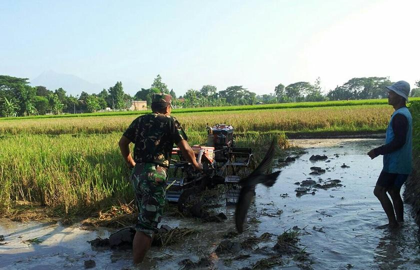 Peduli Dehumusisasi, Babinsa Gantiwarno Bantu Pengolahan Tanah Masyarakat Desa Kerten