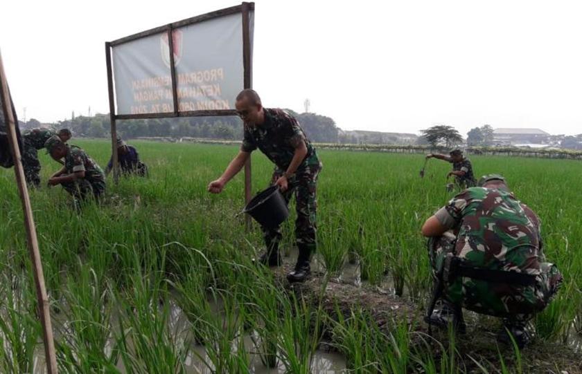 Bantu Petani, Prajurit Koramil Tamansari Turun ke Sawah