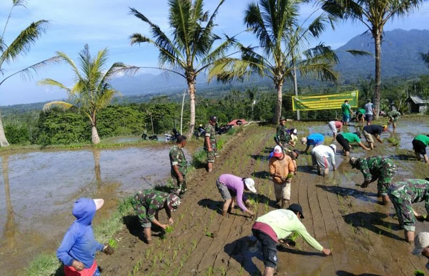 Koramil dan 'Subak' Tanam Padi di Kintamani, Bali