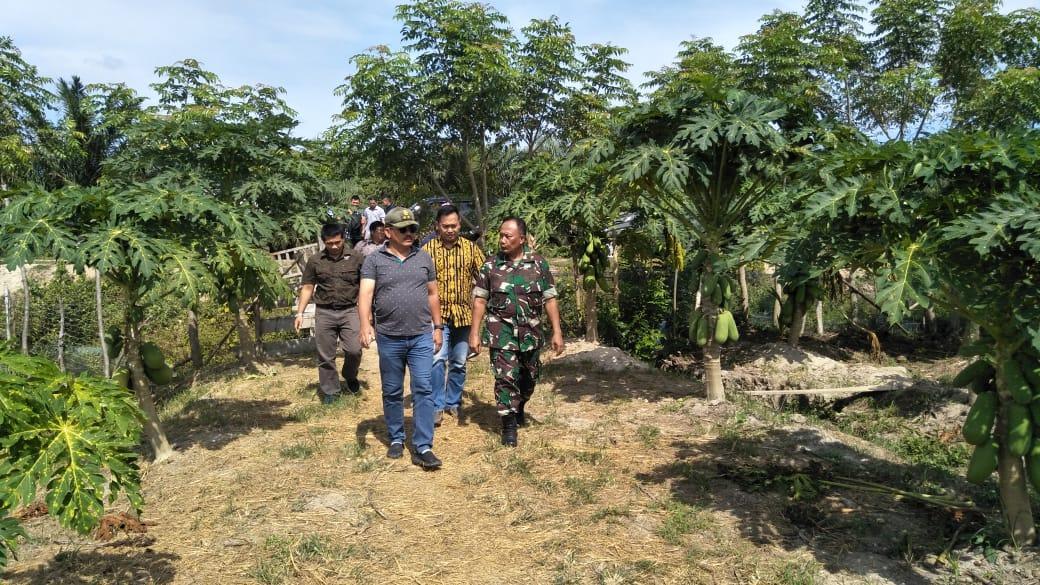 Pangdam IM Tinjau Lahan Pertanian dan Kebun Pepaya di Aceh Jaya