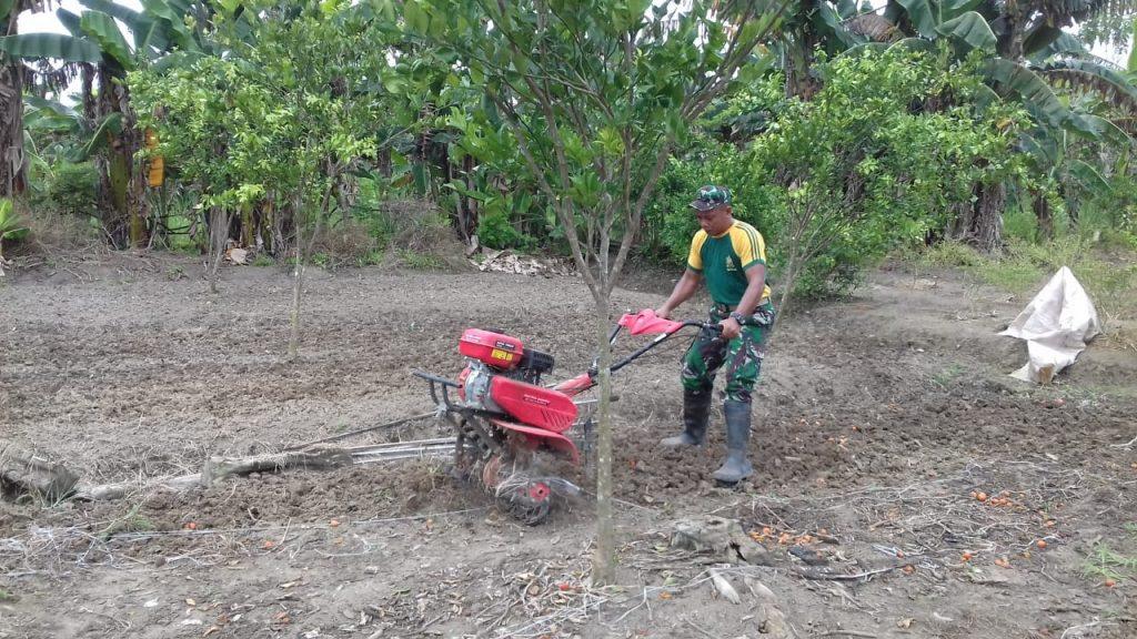 Olah Ladang Tomat dan Cabai, Upaya Satgas Yonif 328/DGH Tingkatkan Ekonomi warga di Perbatasan RI-PNG