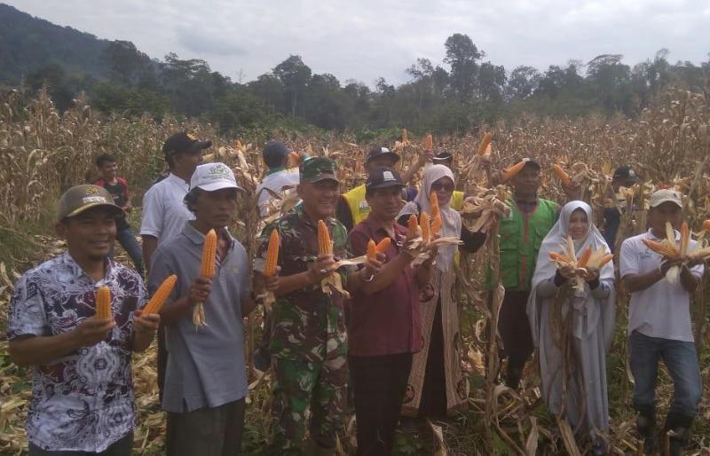 Kodim Aceh Tengah dan Petani, Panen Perdana Jagung 130 Ton