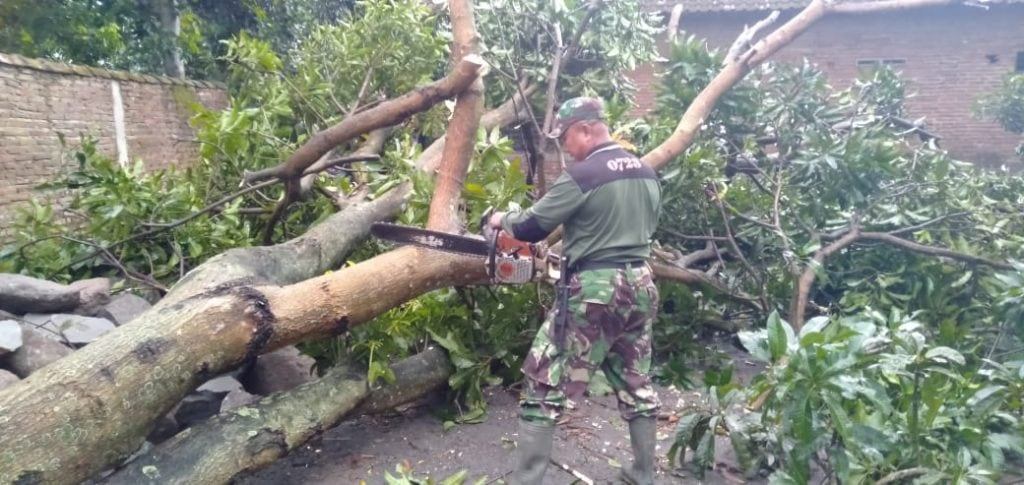 Tanggap Bencana, Babinsa Kodim0723/Klaten Sigap Singkirkan Pohon Tumbang Akibat Cuaca Buruk