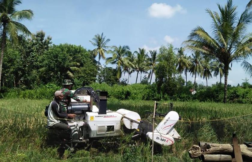 Pendampingan Babinsa, Percepat Proses Panen Para Petani