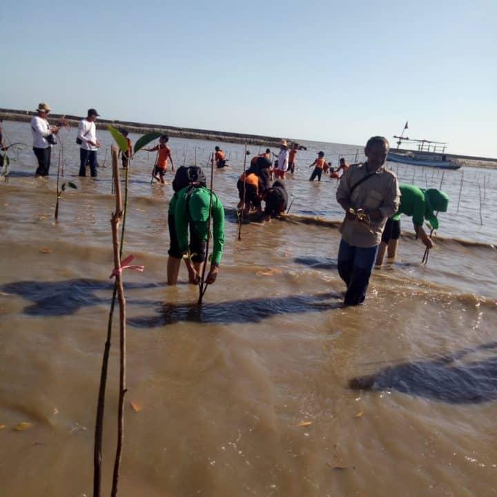 Jaga Ekosistem Pantai, Yonif 631/ant Tanam Mangrove