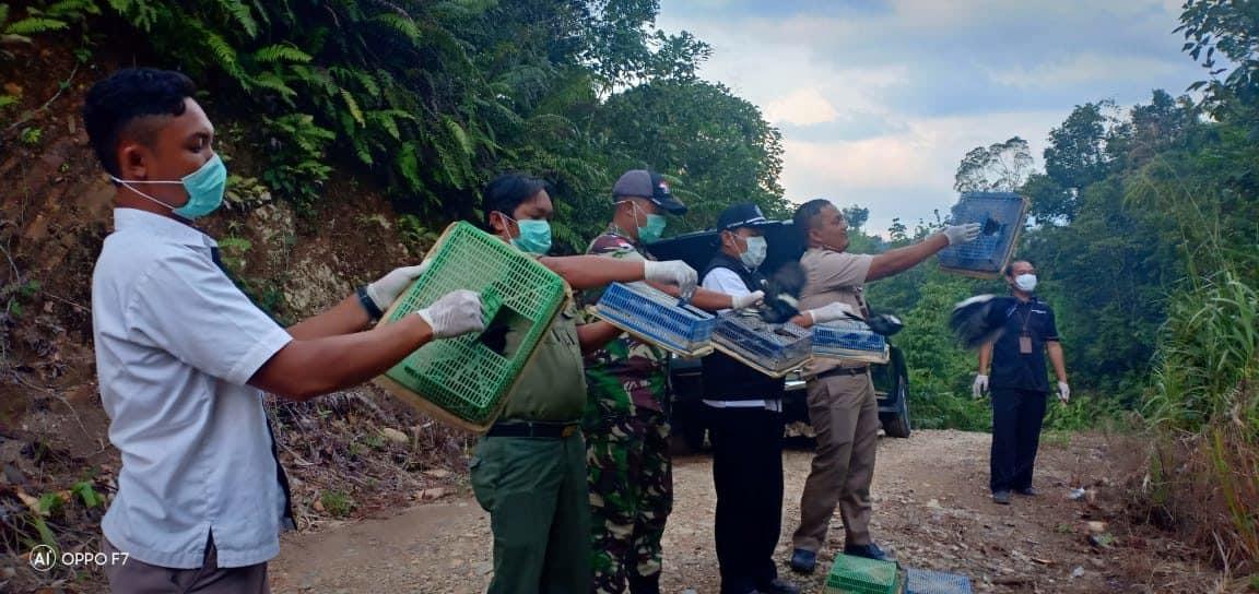 Bernilai Puluhan Juta Rupiah, 215 Ekor Burung Kacer Ilegal Diamankan Satgas Yonmek 643 di Sekayam