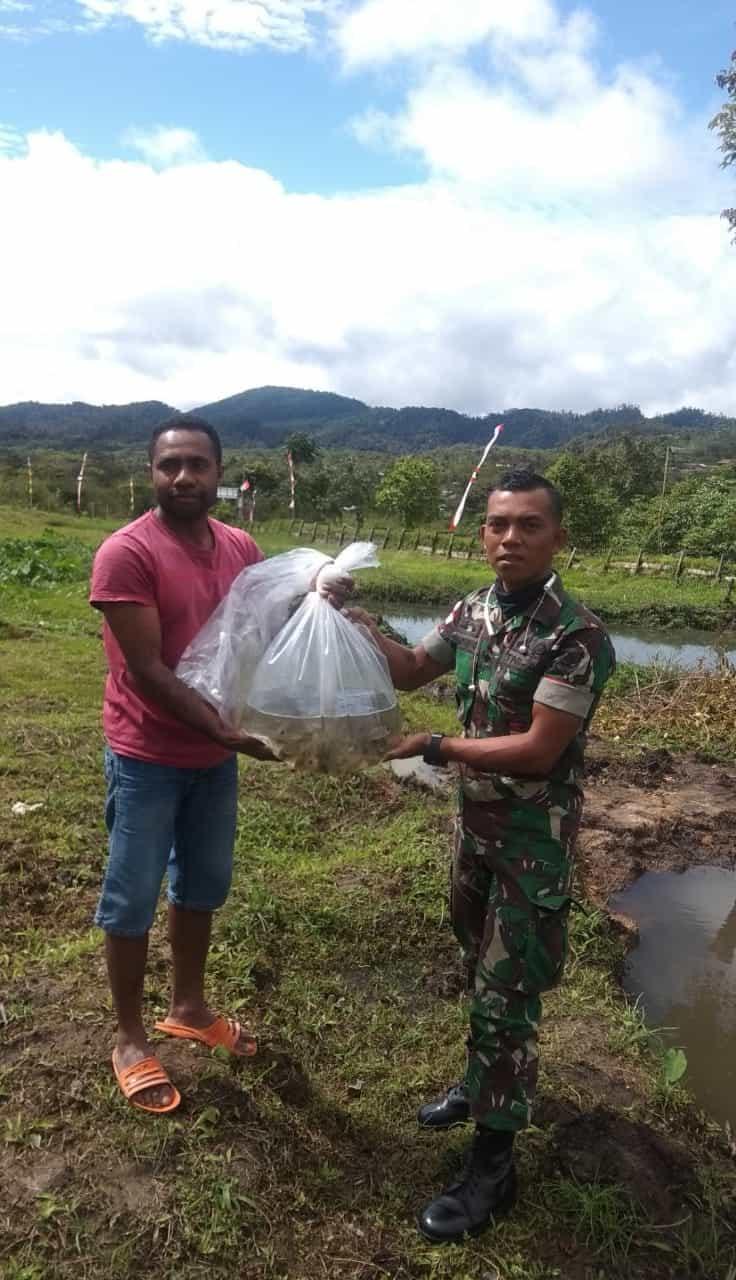 Tingkatkan Ekonomi Warga Papua, Satgas Yonif R 509 Kembangkan Budi Daya Nila di Oksibil