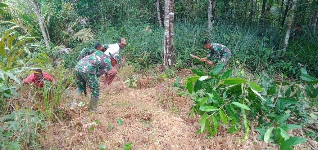 Budidayakan Nanas, Satgas Yonif 406 Pacu Ekonomi Warga Perbatasan RI-PNG