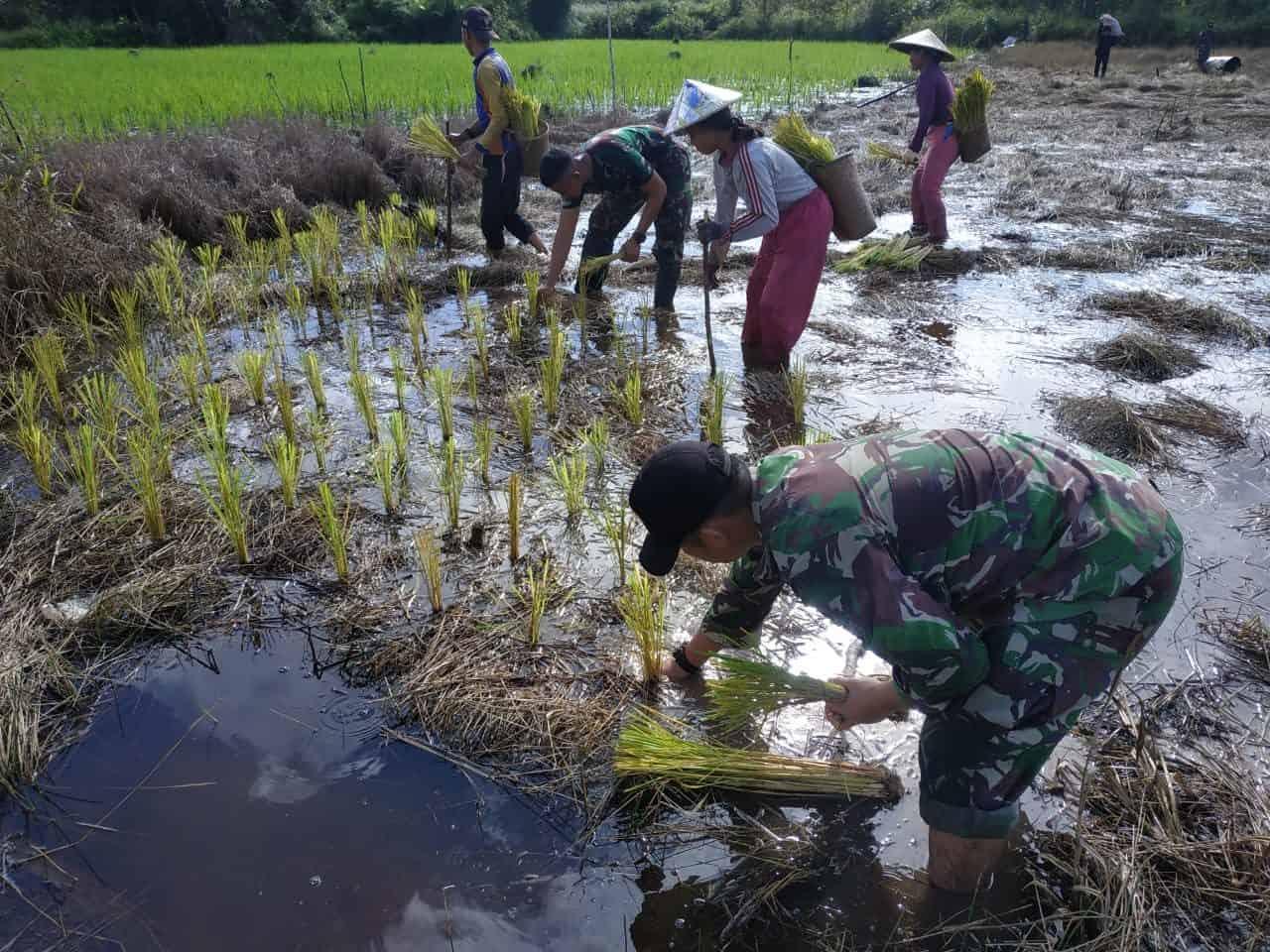 Turun Ke Sawah, Wujud Kebersamaan Satgas 133/YS Dengan Masyarakat Di Tapal Batas