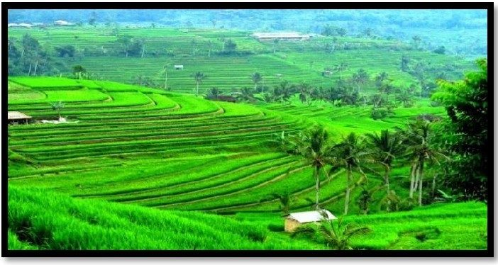Nutrisi Wijayakusuma Solusi Bagi Petani Masa Kini