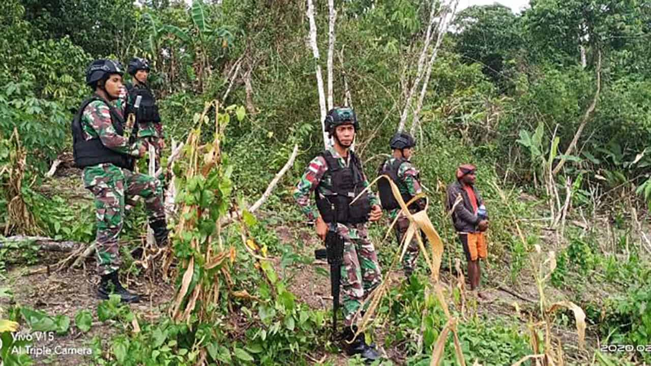 Sisir Hutan Papua, Satgas Yonif 300 Temukan Ladang Ganja