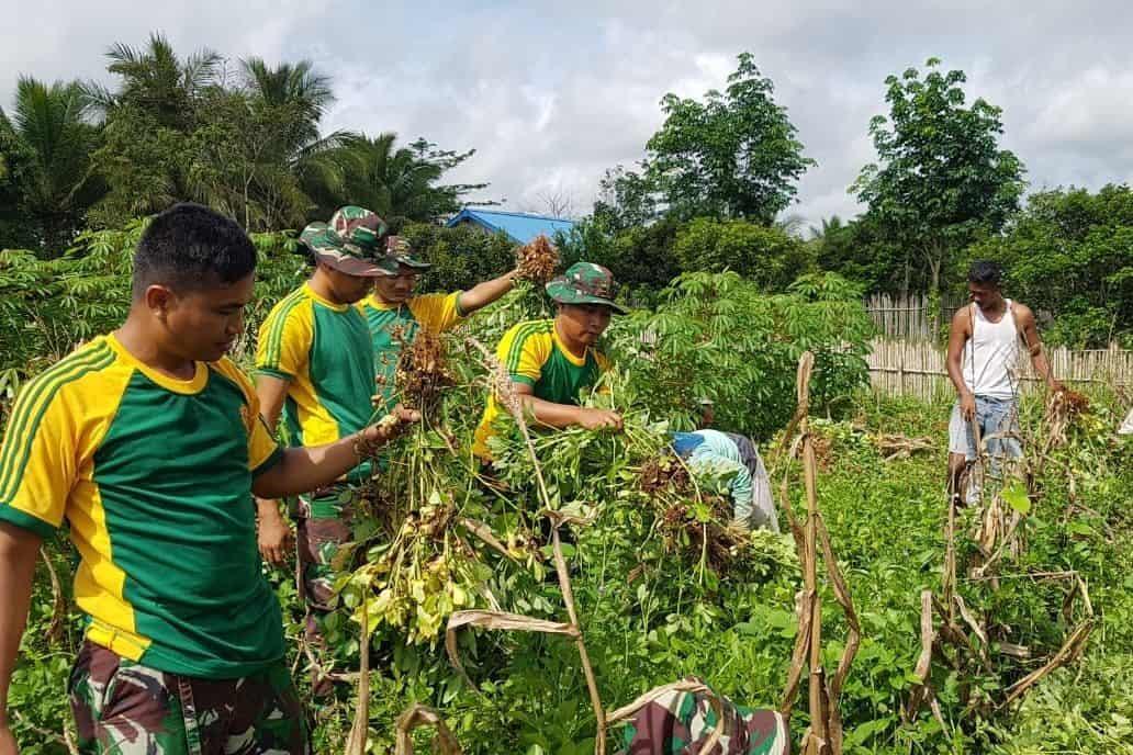 Berdayakan Lahan Kosong, Satgas Yonif 411 dan Warga Panen Kacang Tanah
