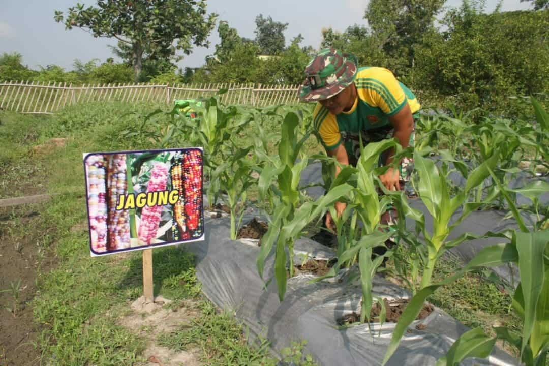 Kebun Kreatif Yonif 413, Ketahanan Pangan Lawan Corona