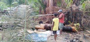 Dampingi Panen Sagu, Satgas Yonif R 509 Bangun Ketahanan Pangan Warga Papua