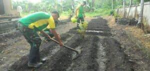 Sarana Edukasi, Yonarmed 9 Buat Kebun Percontohan Di Desa Buli