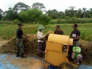 Musim Panen Tiba, Satgas Yonif 300 Bantu Petani di Perbatasan RI-PNG