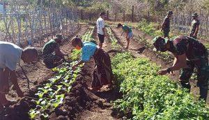 Tingkatkan Kesejahteraan, Satgas Yonif 142 Lakukan Pendampingan Berkebun di Perbatasan