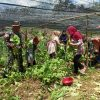 Masyarakat Panen Sayur Di Kebun Percontohan Satgas Yonif 623