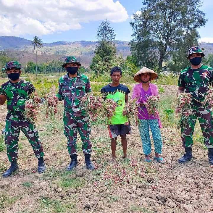 Bantu Petani Panen Bawang, Satgas Yonif RK 744/SYB Berikan Pendampingan