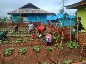 Jaga Ketahanan Pangan, Satgas Yonif 125/Si'mbisa Dampingi Kelompok Tani di Papua