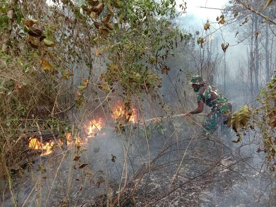 Kebakaran Lahan di Sekitar PLBN Sota, Prajurit Satgas Yonif 125/Si'mbisa Berjibaku Padamkan Api