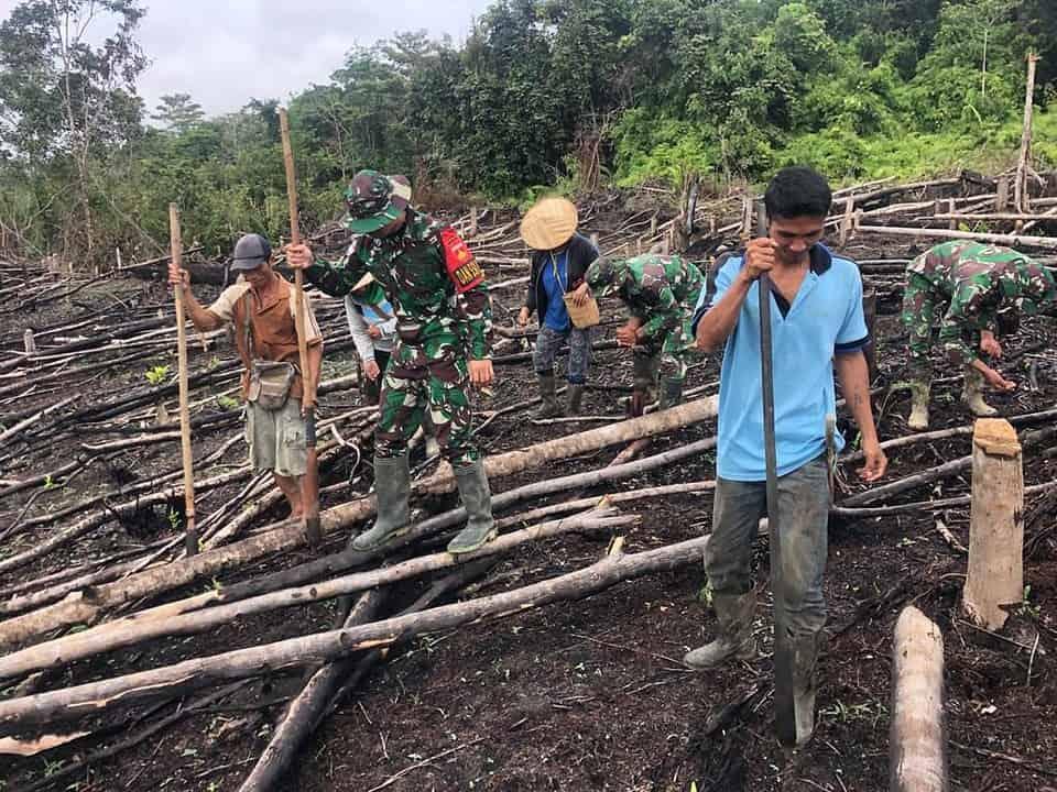 Manunggal Bersama Rakyat, Satgas Yonif 407/PK Bantu Warga Tanam Padi