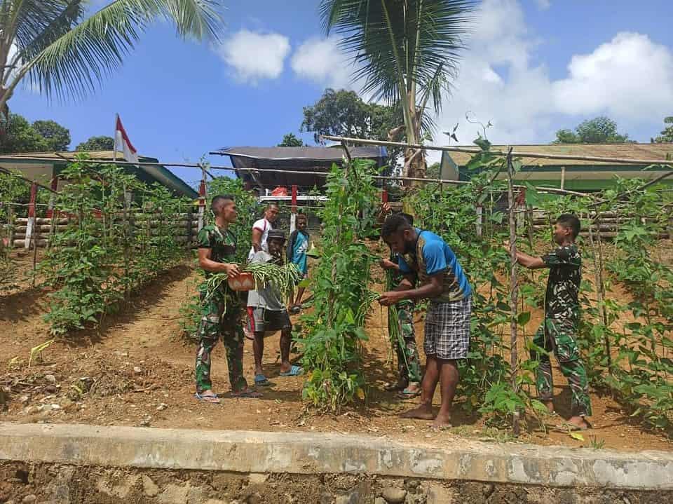 Bersama Masyarakat Kampung Ungalom, Satgas Yonif 312 Panen Kebun Olahan Prajurit