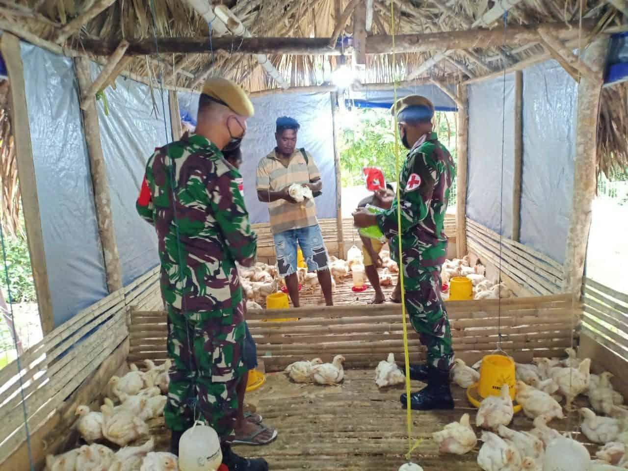 Tingkatkan Perekonomian Warga Perbatasan, Satgas Yonarmed 3/105 Tarik Gelar Pelatihan Budidaya Ayam Potong
