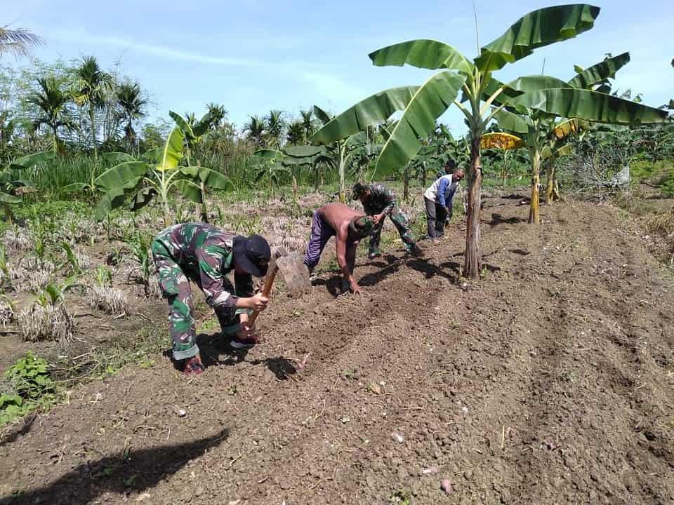 Stabilkan Ketersediaan Bahan Pokok Makanan, Satgas Yonif MR 413 Kostrad Bantu Warga Perbatasan RI-PNG Tanam Pisang