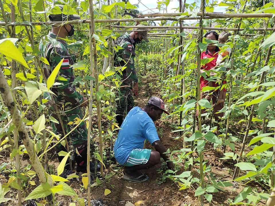 Satgas Pamtas Yonif Mekanis 516/CY Ajarkan Warga Perbatasan Ilmu Pertanian Untuk Mendukung Ketahanan Pangan